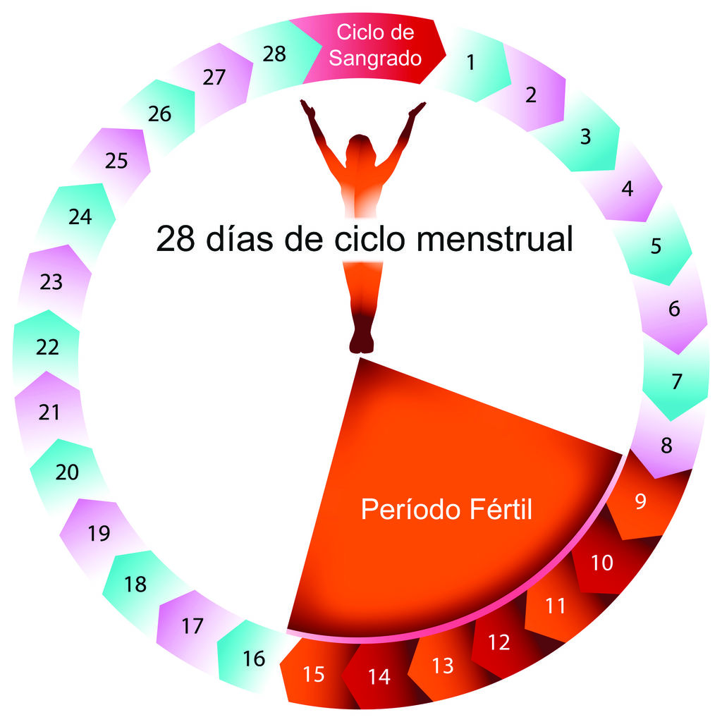 Fertiles quedar embarazada tus calcular como dias para