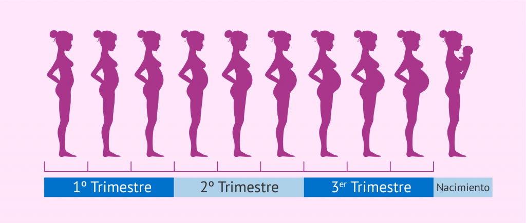 919c2072b ▷ Tu Embarazo Semana a semana
